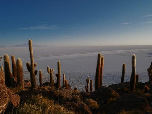 ile aux cactus Bolivie
