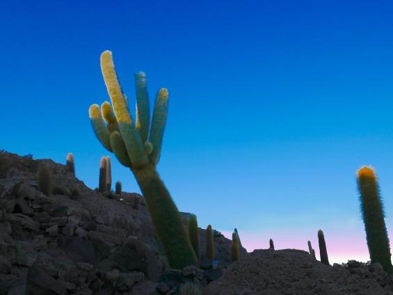 Cactus géant salar d'uyuni Bolivie